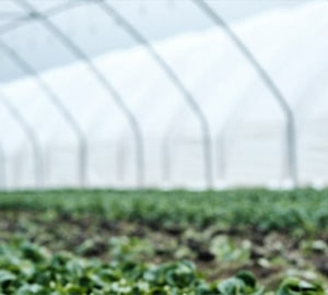 Glastuinbouw
