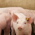 We werken nu meer vanuit de behoefte van de veehouder: waarmee is hij gebaat?