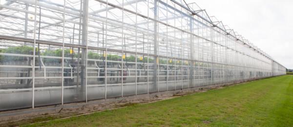 Gebruik alternatieve energie stijgt onder glastuinders