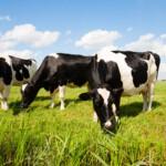Waardevolle informatie helpt ons bij het succesvol benaderen van melkveehouders