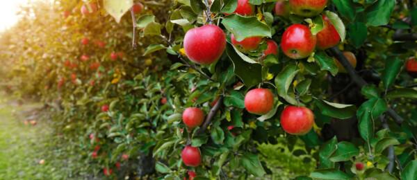Meer dan de helft van de fruittelers beregent tegen nachtvorst