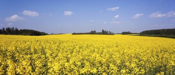 4 trends op het gebied van duurzaamheid in de agrarische sector
